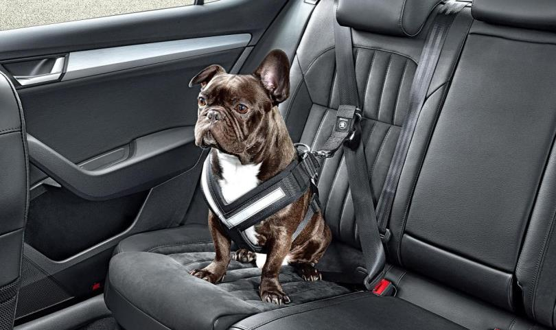Best Dog Car Seat Belt