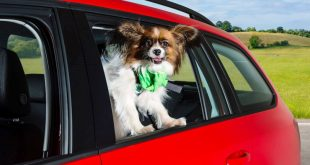 Cool Dog in Skoda Octavia