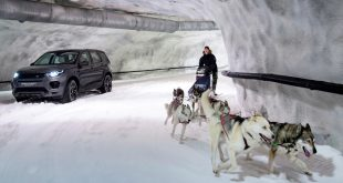Dog power vs horsepower in the Discovery Sport snow tunnel challenge